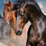 red, black, bay, brown horses