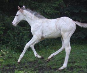 W20 foal
