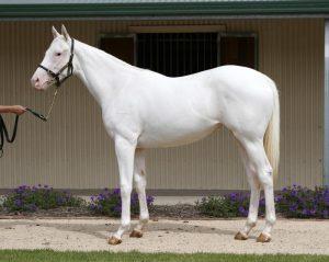white mare the opera house