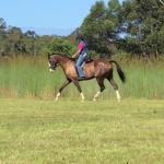Tanlee Romeo under saddle