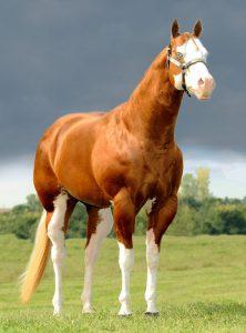 SW3 horse TD Kid