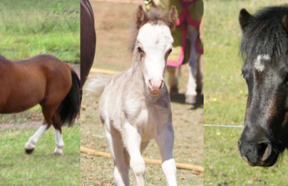 SB1 + W20 horses: Case study one