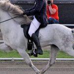 gaited icelandic pony. Ambling Iceland pony during World Championship. Photo: Monika Reissmann