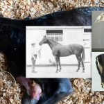 warmblood fragile foal syndrome