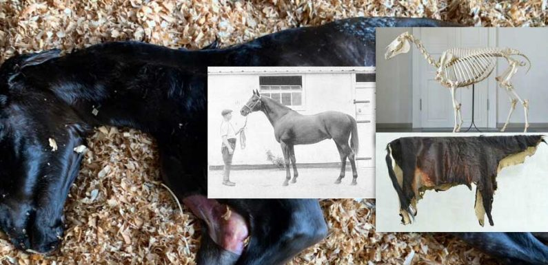 Mystery about cause of genetic disease in horses