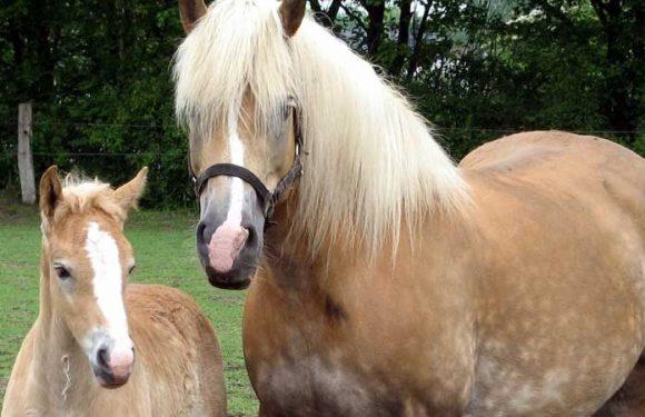 WFFS found in 21 breeds