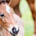 pretty foal